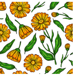 Calendula seamless pattern isolated medical vector