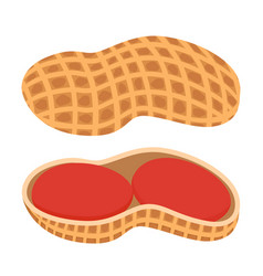 Fresh peanut nutshell nuts in cartoon style flat vector