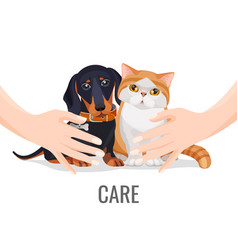 Human hands take care about cute pets dog and cat vector