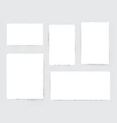 blank white torn paper pieces vector image