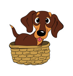 Dachshund dog breed vintage vector