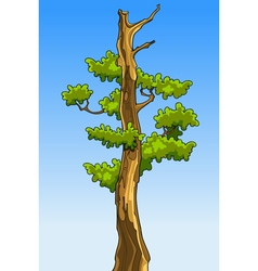 Cartoon tree with leaves without tops vector