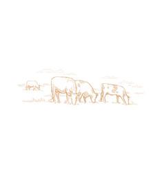 cows graze in meadow hand drawn sketch vector image