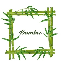 Frame with bamboo plants and leaves Design for vector