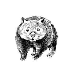 hand drawn wombat vector image