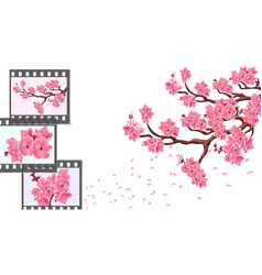 sakura curved branches of a cherry tree with vector image