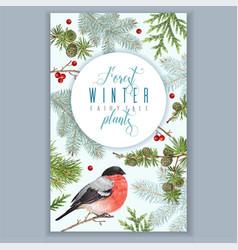 Winter bullfinch banner vector