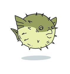 blowfish vector image