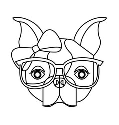 cute french bulldog female with hipster accessory vector image