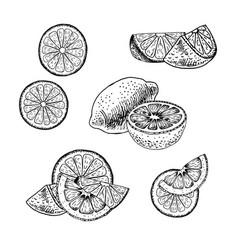 hand drawn set of lemon sketch vector image