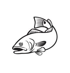 Spottail bass red drum redfish channel bass vector