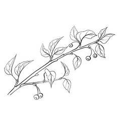 twig with leaves vector image