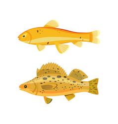 yellow fish types zebra set vector image