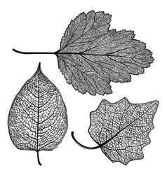 set skeletonized leaves vector image vector image