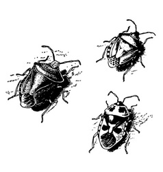 shield bug vector image vector image