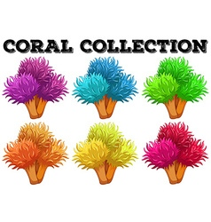 Coral flowers in different colors vector
