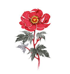 hand drawn red flower isolated on white background vector image