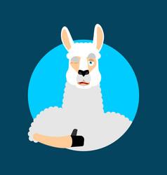 lama alpaca thumbs up and winks emoji animal vector image