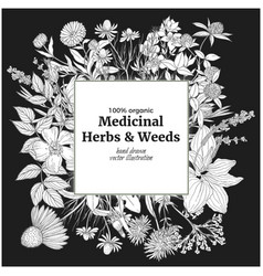 Square banner with medicinal flowers and herbs vector