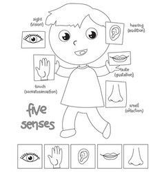 five senses boy coloring vector image