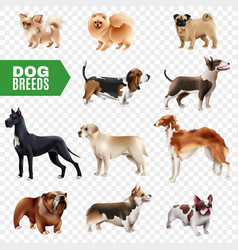 Dog breeds transparent icon set vector