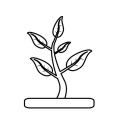 plant with leaves in soil icon imag vector image