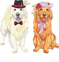 hipster pair of dogs labrador vector image