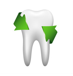 white tooth with two green arrow stomatology icon vector image