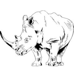 attacking big rhinoceros drawn hand vector image