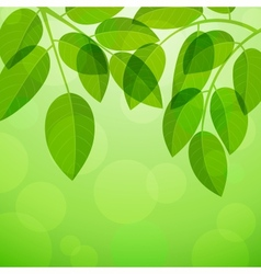 Background with foliage vector image
