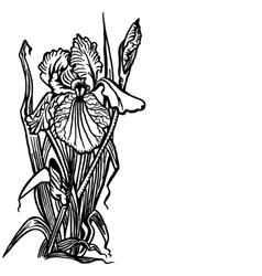 bouquet of irises vector image