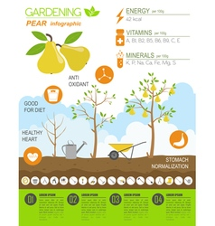 Gardening work farming infographic Pear Graphic vector