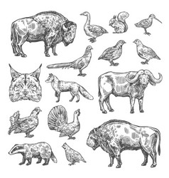 isolated wild animals and birds vector image