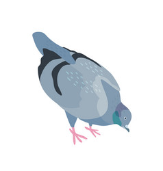 pigeon pecking food flat bird vector image