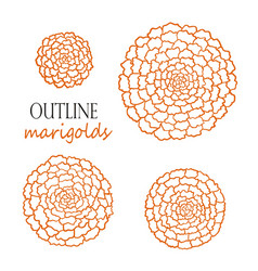 Set of four outline orange marigolds vector