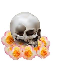 Skull on roses vector image