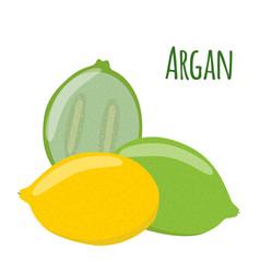 argan fruit herbal cosmetics eco therapy natural vector image