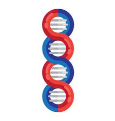dna strands molecule spiral vector image
