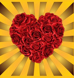 heart from red roses flowers on the golden vector image