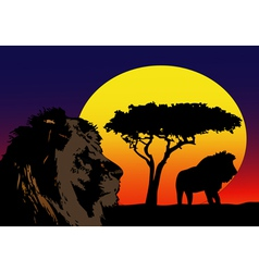 Lions in Africa vector image