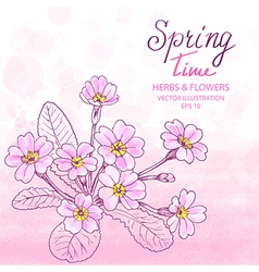 Primula Greetings Card vector