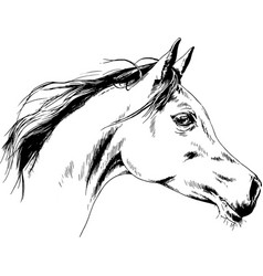 Race horse without a harness drawn in ink hand vector