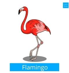 Flamingo learn birds educational game vector