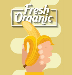 hand holding fresh organic fruit banana vector image