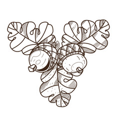 Oak branch with acorns leaves and fruits vector