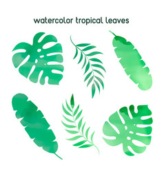 Watercolor tropical leaves watercolor vector
