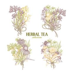 Cute color bouquets composed medicinal herbs vector