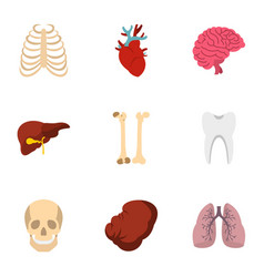 human organs anatomy icons set flat style vector image