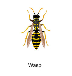 Insect wasp iconcartoon icon vector