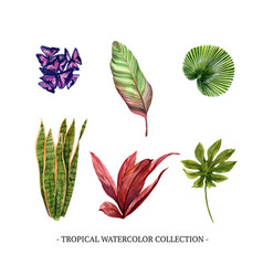 Various isolated watercolor foliage vector